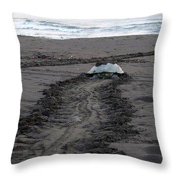 Green Sea Turtle Returning To Sea Throw Pillow