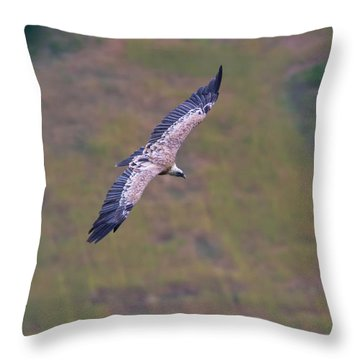 Griffon Vulture Flying, Drome Provencale, France Throw Pillow