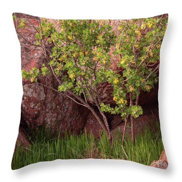 Throw Pillow featuring the photograph Hidden by Iris Greenwell