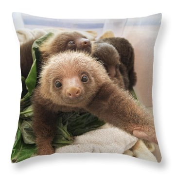 Throw Pillow featuring the photograph Hoffmanns Two-toed Sloth Choloepus by Suzi Eszterhas
