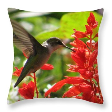 Humming Bird In The Garden Throw Pillow