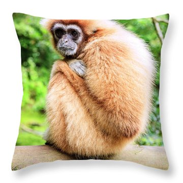 Throw Pillow featuring the photograph Lar Gibbon by Alexey Stiop