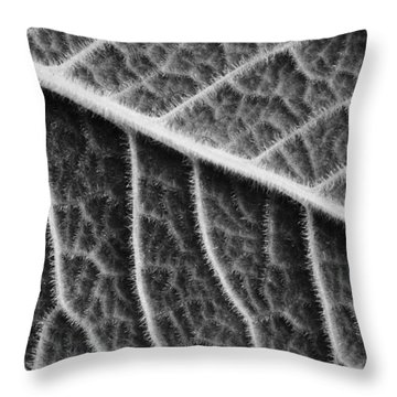 Throw Pillow featuring the photograph Leaf by Chevy Fleet