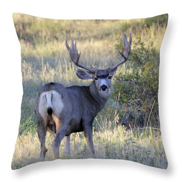 Throw Pillow featuring the photograph Looking Back by Shane Bechler