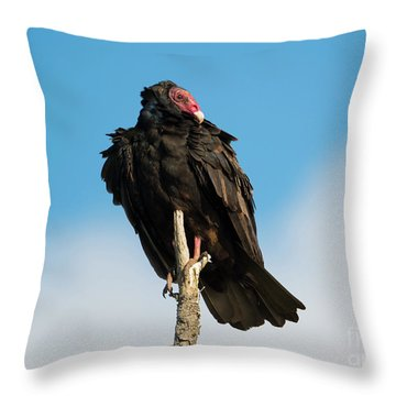 Looking For A Meal Throw Pillow by Mike Dawson