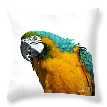 Macaw Bird Throw Pillow