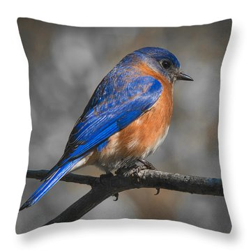 Throw Pillow featuring the photograph Male Eastern Bluebird by Robert L Jackson