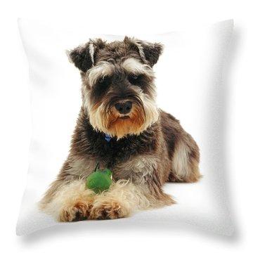 Miniature Schnauzer Throw Pillow by Jane Burton