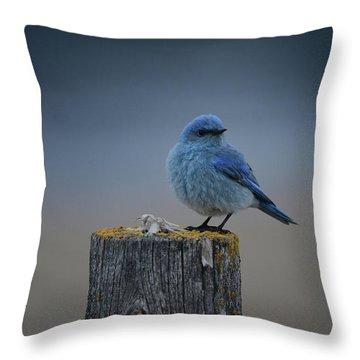 Mountain Bluebird 2 Throw Pillow