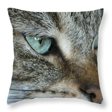 Mr. Blue Eyes Throw Pillow by Rhonda McDougall