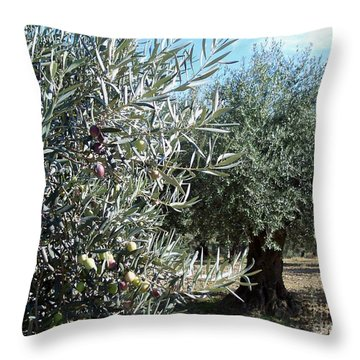 Olive Trees Throw Pillow by Judy Kirouac