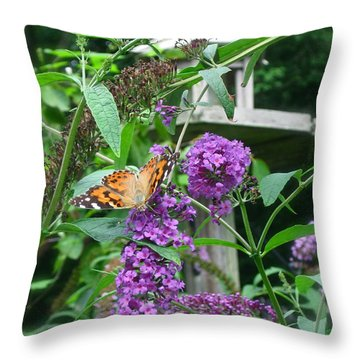 Painted Lady Butterfly Throw Pillow by Nancy Patterson