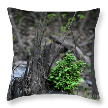 Throw Pillow featuring the photograph Persistence by Skip Willits