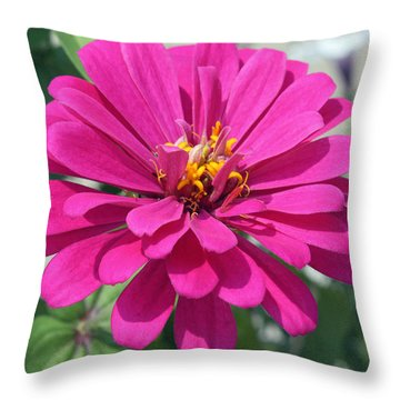 Throw Pillow featuring the photograph Pink Zinnia by Ellen Tully