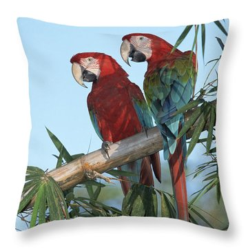Red And Green Macaw Ara Chloroptera Throw Pillow by Konrad Wothe