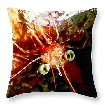 Red Night Shrimp Throw Pillow by Amy McDaniel