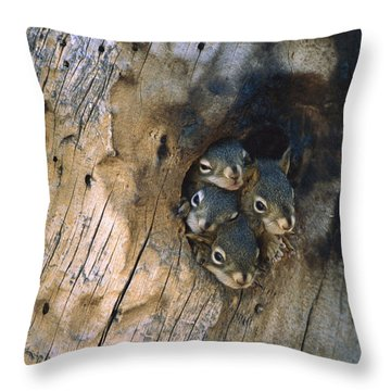 Red Squirrel Tamiasciurus Hudsonicus Throw Pillow by Michael Quinton
