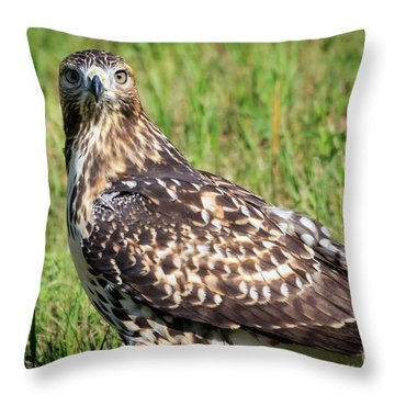 Red-tail Portrait Throw Pillow