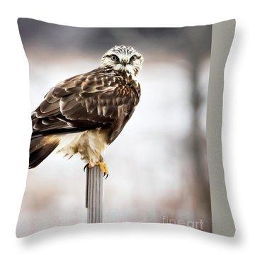 Rough-legged Hawk Throw Pillow by Ricky L Jones