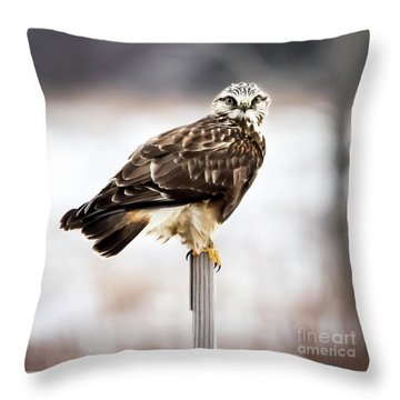 Throw Pillow featuring the photograph Rough-legged Hawk by Ricky L Jones