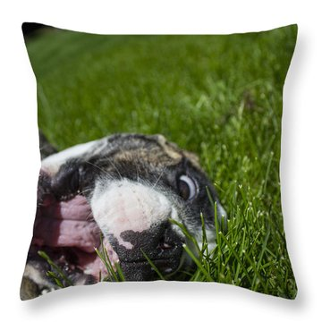 Roxy The Bulldog Puppy Throw Pillow