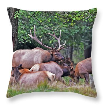 Royal Roosevelt Bull Elk Throw Pillow by Jack Moskovita
