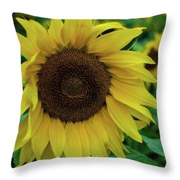 Sunflower Fields Throw Pillow