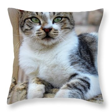 Throw Pillow featuring the photograph The Wait by Munir Alawi