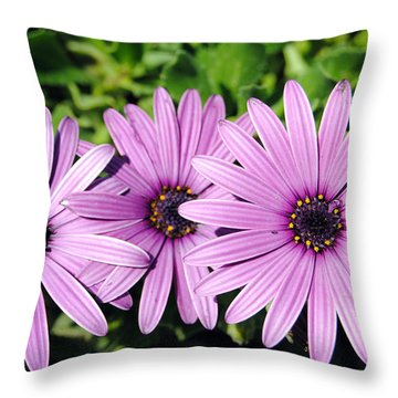 The African Daisy 2 Throw Pillow
