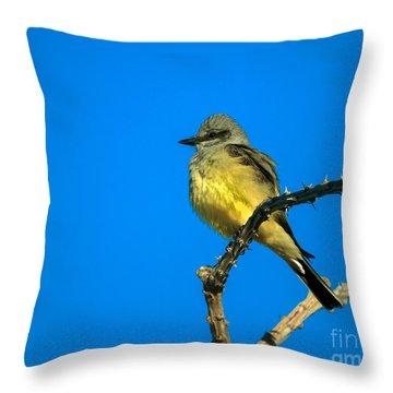 Western Kingbird Throw Pillow by Robert Bales