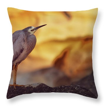 White-faced Heron At The Beach Throw Pillow