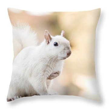 White Squirrel Throw Pillow by Vizual Studio
