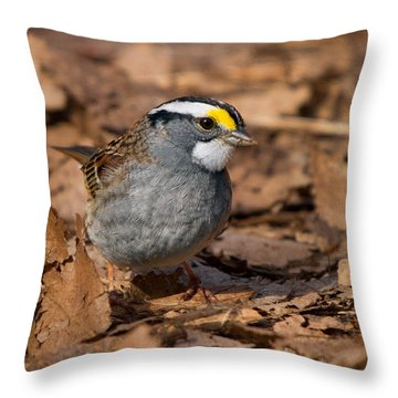 White-throated Sparrow Throw Pillow by Timothy McIntyre