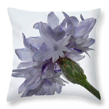 White With Blue Cornflower Throw Pillow