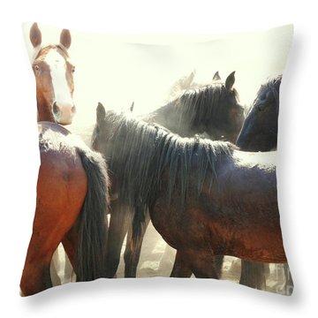 Wild Horses - Australian Brumbies 3 Throw Pillow