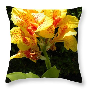 Throw Pillow featuring the photograph Yellow Canna Lily by Terri Mills