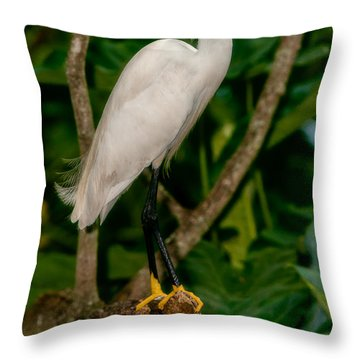 Throw Pillow featuring the photograph White Egret by Christopher Holmes