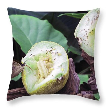 Butterfly Buffet Throw Pillow