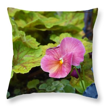 2015 After The Frost At The Garden Pansies 3 Throw Pillow by Janis Nussbaum Senungetuk