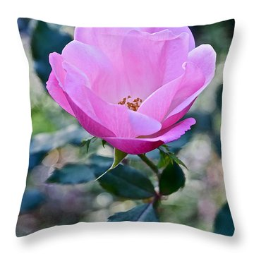 2015 After The Frost At The Garden Pink  Rose Throw Pillow