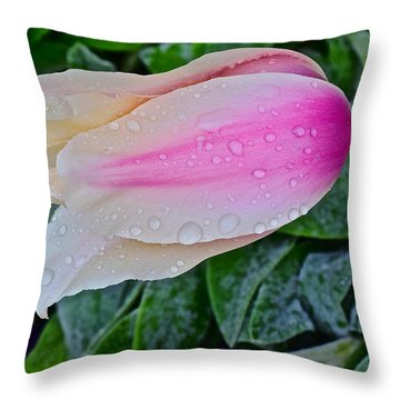 2015 Spring At Olbrich Gardens Lily Tulip In The Rain Throw Pillow