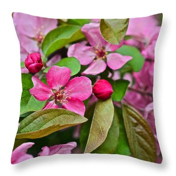 2015 Spring At The Gardens Pink Crabapple Blossoms 2 Throw Pillow