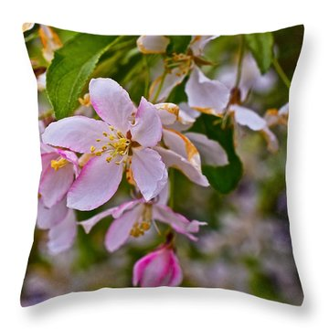 2015 Spring At The Gardens White Crabapple Blossoms 1 Throw Pillow