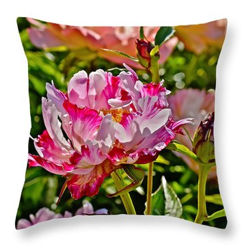 2015 Summer's Eve At The Garden Candy Stripe Peony Throw Pillow