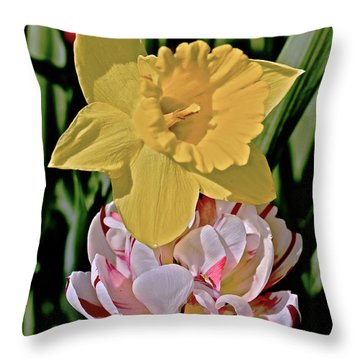 Throw Pillow featuring the photograph 2018 Acewood Tulips Daffodil With Tulips by Janis Nussbaum Senungetuk