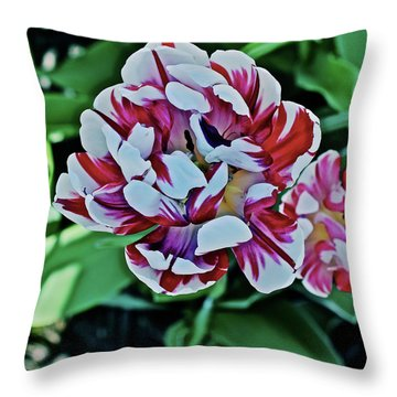 Throw Pillow featuring the photograph 2018 Acewood Tulips Red And White 1 by Janis Nussbaum Senungetuk