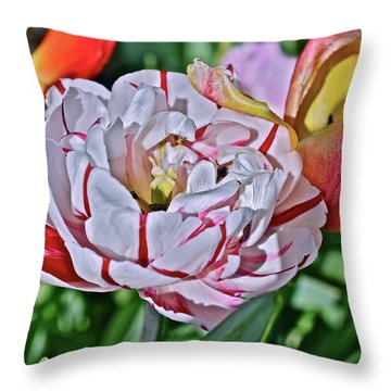 Throw Pillow featuring the photograph 2018 Acewood Tulips Red And White Orange And Yellow by Janis Nussbaum Senungetuk
