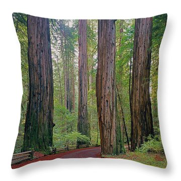 Throw Pillow featuring the photograph 2b6391 Armstrong Redwoods Ca by Ed Cooper Photography