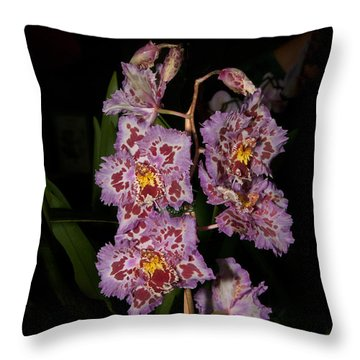 Cattleya Style Orchids Throw Pillow by Carol Ailles