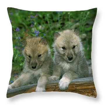 Arctic Wolf Canis Lupus Tundrarum Throw Pillow